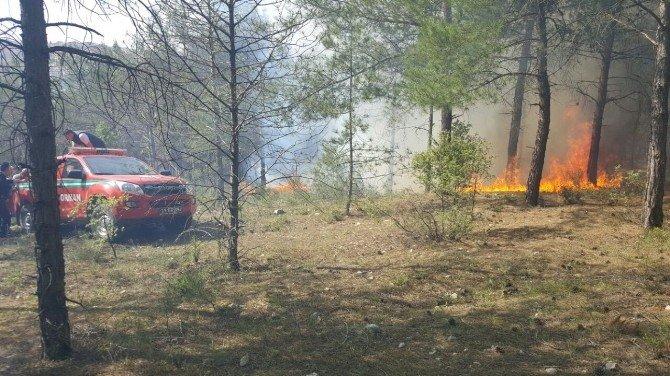 Bilecik Kent Ormanı'nda Yangın