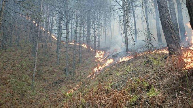 Madran Dağı'nda 50 Hektar Alan Kül Oldu