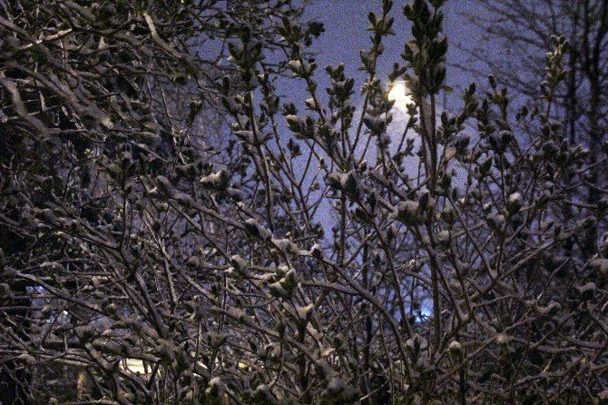 Erzurum'da Kar Yağışı