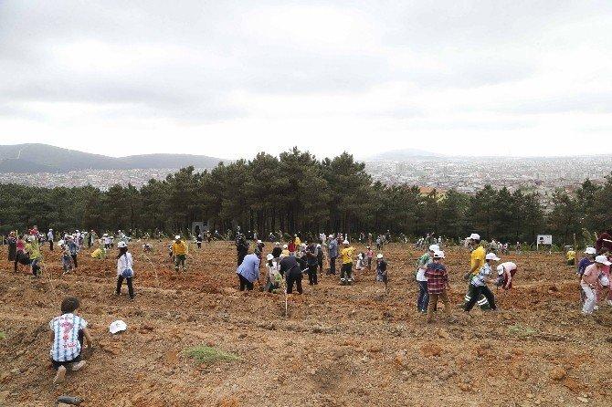 Öğrenciler, 571 Fidanı Toprakla Buluşturdu