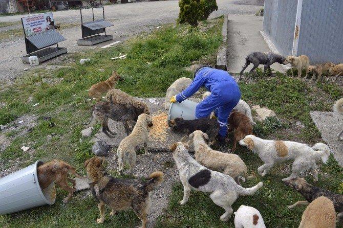 Yemekler Sokak Hayvanları İçin Toplanıyor