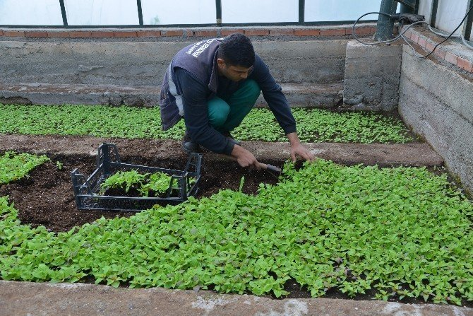 Diyarbakır'a 175 Bin Çiçek Dikilecek