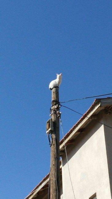 Telefon Direğinde Mahsur Kalan Kediyi İtfaiye Kurtardı