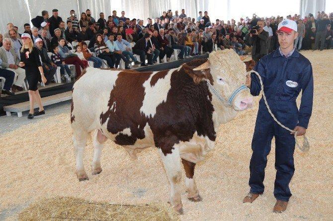 Burdur Tarım Ve Hayvancılıkta Zirveye Oynayacak