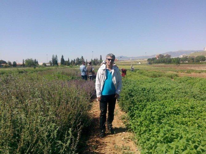 Burhaniyeli Çiftçiler Aromatik Bitki Ekecek