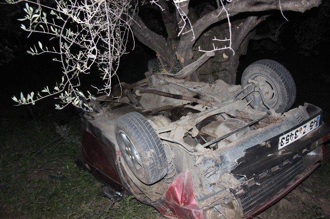 Kaza Sonrası Zeytinlikte Can Pazarı Yaşandı