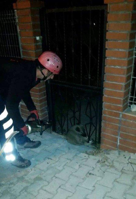 Demir Parmaklığa Sıkışan Köpeği İtfaiye Kurtardı
