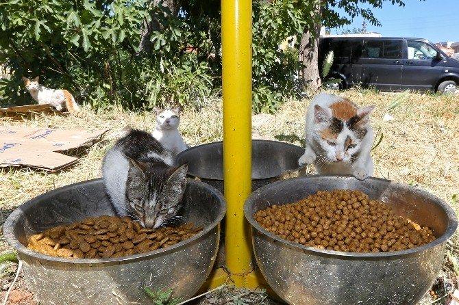 Buca'da Sokak Hayvanları İçin Yoğun Mesai