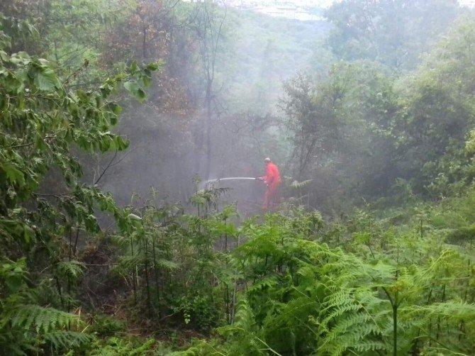 Sarıyer'de Orman Yangını