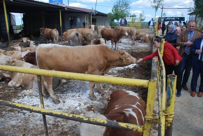 Kadın Çiftçi Adaylarından İnceleme Gezisi