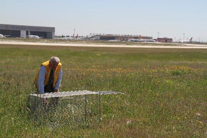 Havalimanına Giren Köpekler İçin Özel TİM