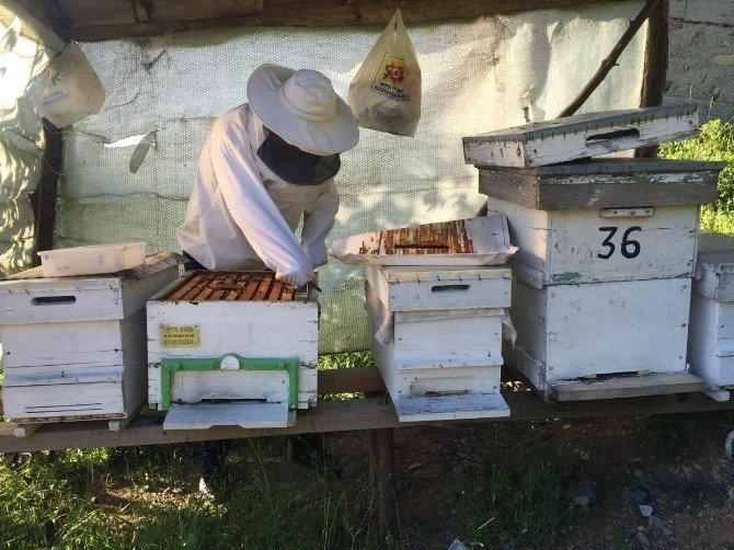 Arıcılar, Bal Sezonuna Hazırlanıyor