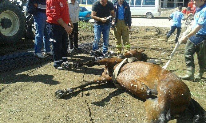 İnşaat Çukuruna Düşen Atı İtfaiye İş Makinesi İle Kurtardı