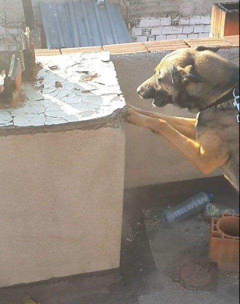 Bacadaki Uyuşturucuyu Narkotik Köpekleri Buldu