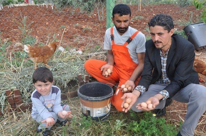 Genç Girişimci Organik Yumurta Çiftliği Kurdu