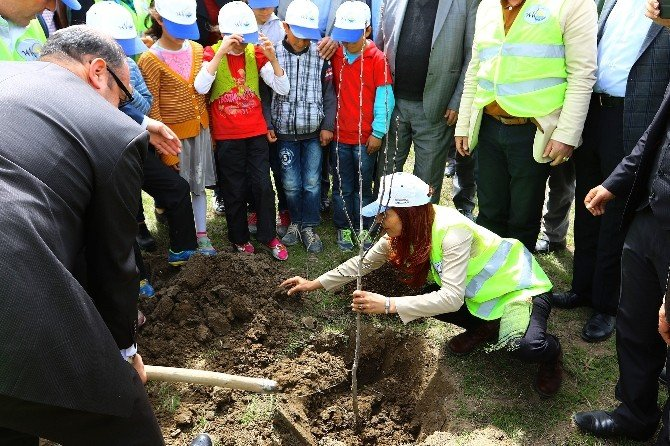 Büyükşehir Belediyesi, 2016 Yılında 49 Bin 500 Meyve Fidanı Dikecek