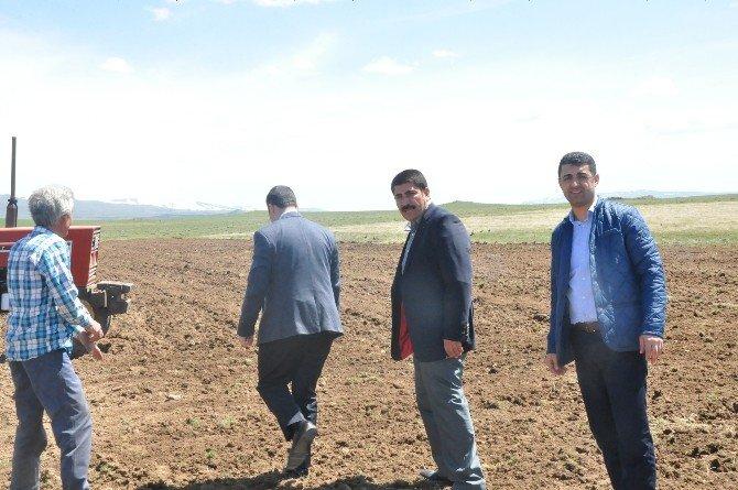 Patnos Ziraat Odası Başkanı Hakan Hakverdi, Tarlalarını Süren Çiftçileri Tarlada Ziyaret Etti.