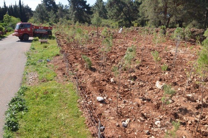 Antalya'da Cumhurbaşkanı Ve Başbakan Adına Hatıra Ormanları Kuruldu