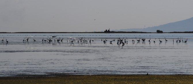 Su kuşları için Osmangazi Köprüsü'ne kavis verildi