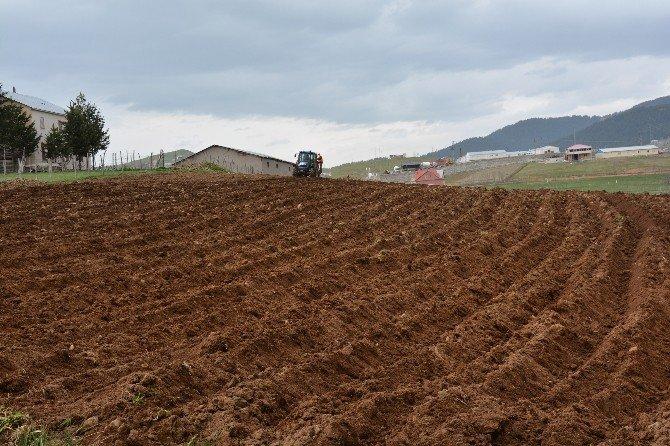 Patates Üretimini Artırmak İçin Belediye Tarla Kurdu