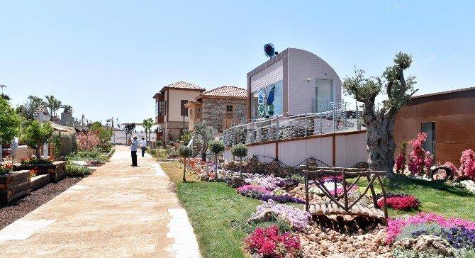 Kepez'in EXPO Sembolü Zeytin