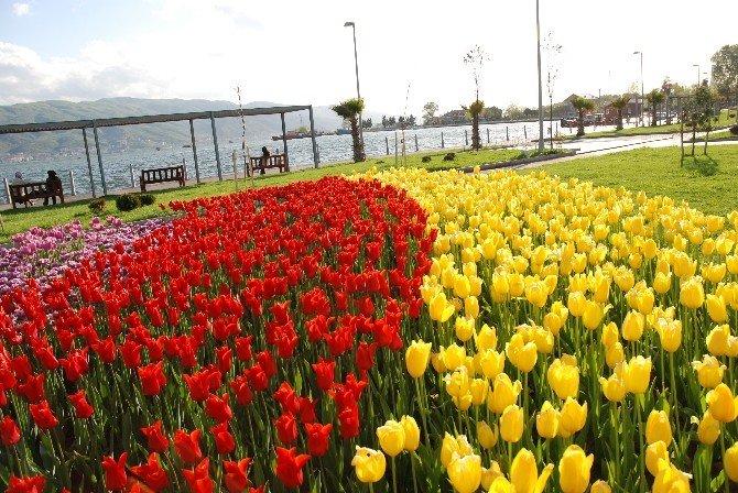 Körfez'de 200 Bin Çiçek Toprakla Buluştu