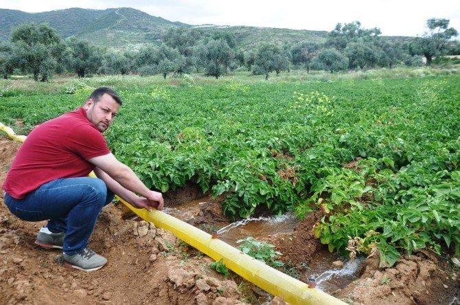 Üreticiler Süte Yapılan Müdahaleyi Patatese De İstiyor