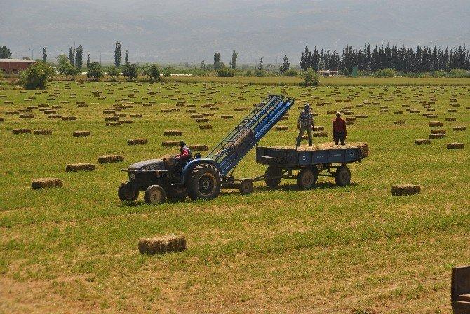 Yonca Üretimi Çiftçiyi Memnun Ediyor