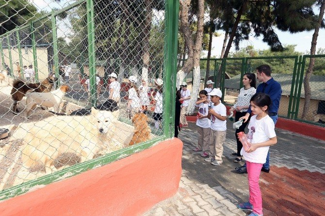 Büyükşehir Sokak Hayvanlarına Sahip Çıkıyor