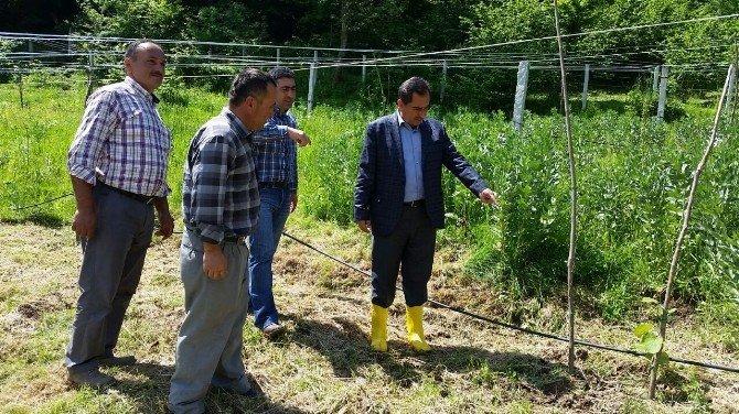 Bartın'da Organik Tarım Gelişiyor