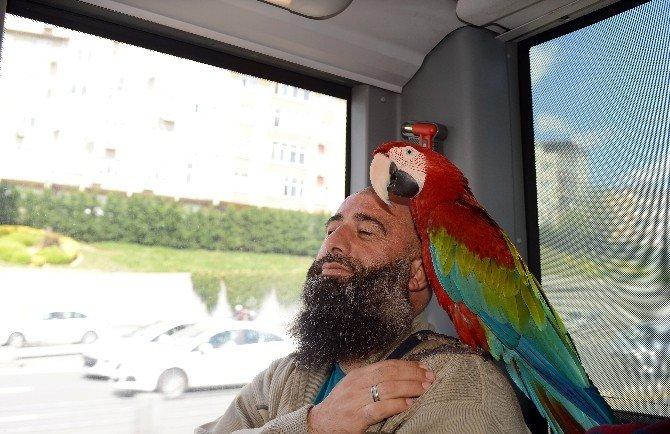 """""""Allah"""" Diyen Papağan Metrobüs Yolcularını Hayrete Düşürdü"""