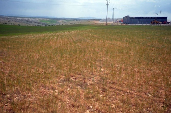 Karaman'da Kuraklık Çiftçiyi Vurdu