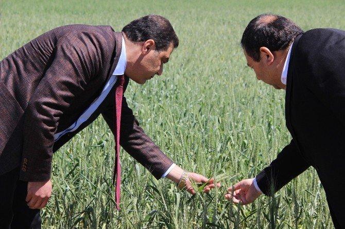 30 Bin TL Hibe, 100 Bin TL Kredi Projesi Çiftçinin Yüzünü Güldürdü
