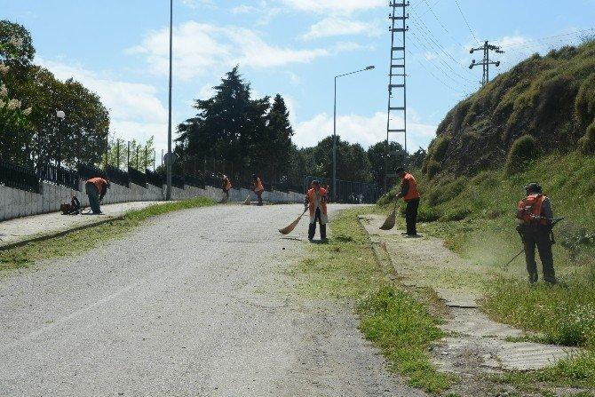 Sinop'ta Yaza Hazırlık