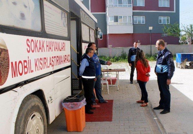 Yenişehir'de Sahipsiz Sokak Hayvanları Kısırlaştırıldı