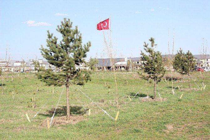 Ağrı İbrahim Çeçen Üniversitesi'nde 15 Bin Ağaç Toprakla Buluştu
