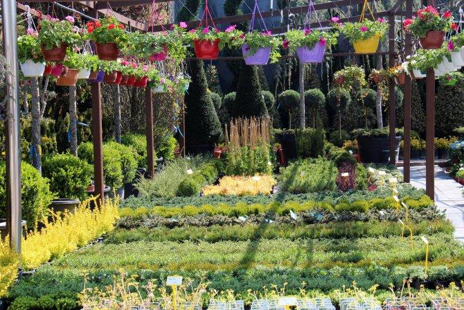 'Çiçek Pazarı' yenileniyor
