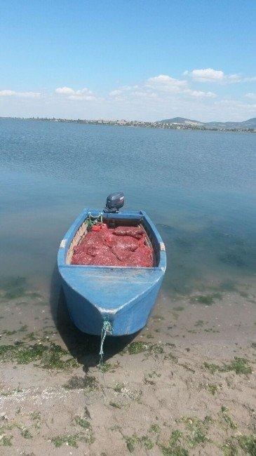 Edirne'de 1 Ton Canlı Midye Ele Geçirildi