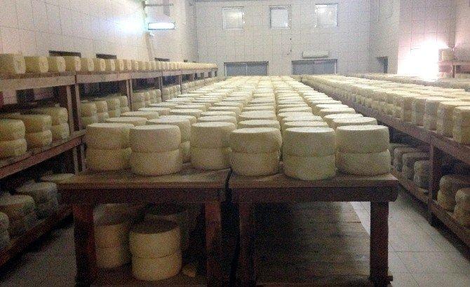 Karslı Peynir Üreticileri, İsviçre'deki Peynirciliği İnceledi