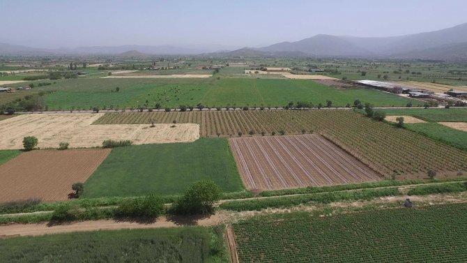 Ödemiş Ovası'nda 196 bin 500 dekar arazi suya kavuşacak