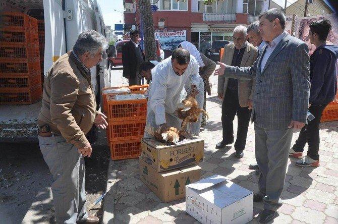 Suşehri Ziraat Odası Üreticilere Tavuk Dağıttı