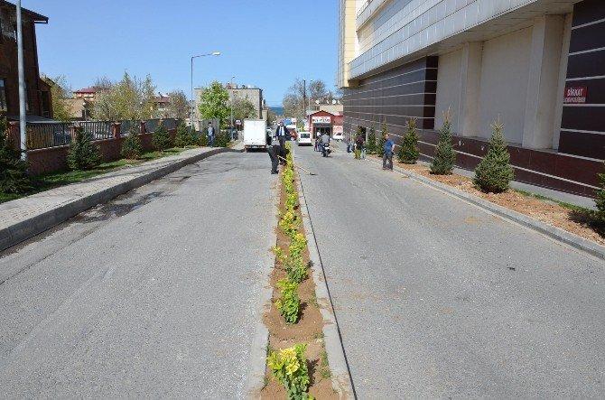 Tatvan Belediyesi, Peyzaj Çalışmalarına Başladı