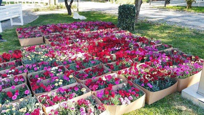 Parklara Binlerce Çiçek Dikiliyor