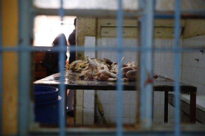 Kaçak Tavuk Operasyonunda Şoke Eden Görüntü