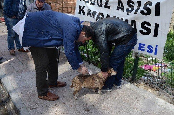 Belediyeden Köpeklere Ücretsiz Kuduz Aşısı