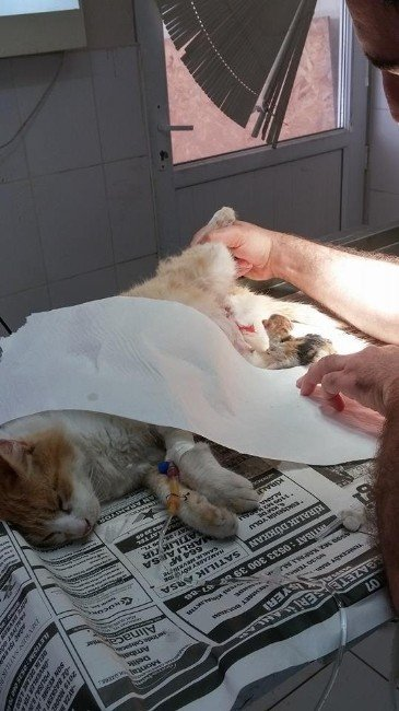 Doğum Yaparken Köpeğin Saldırısına Uğrayan Kedi, Sezaryanla 4 Yavru Dünyaya Getirdi