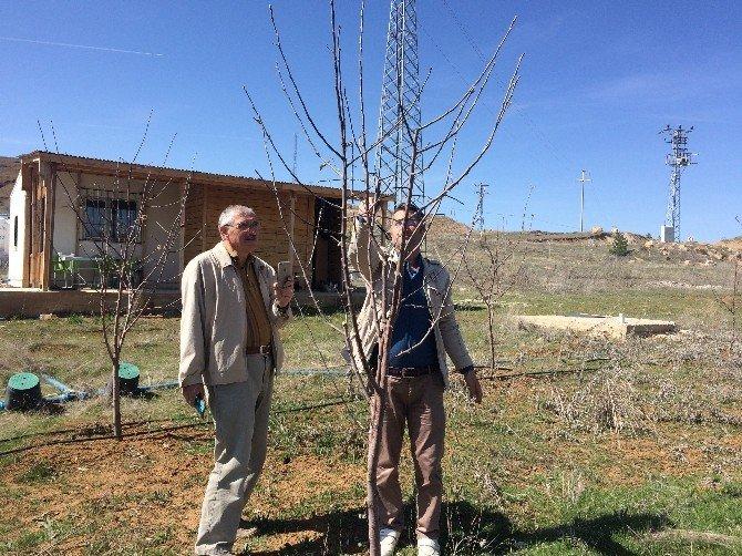 Çiftçilere Uygulamalı Ağaç Budama Eğitimi