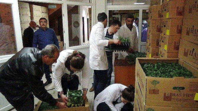Ziraat Odası'ndan Çiftçilere 500 Bin Fide Dağıtımı