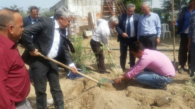 Aydın'da Zeytin Yetiştiriciliğinde İlk Damızlık Anaçlık Kuruldu