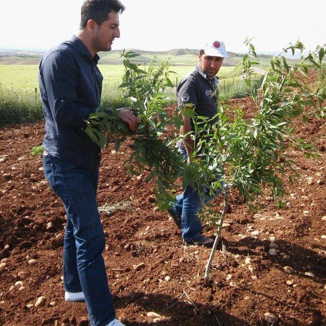 Tyd Birimi Badem Bahçelerini Kontrol Ediyor